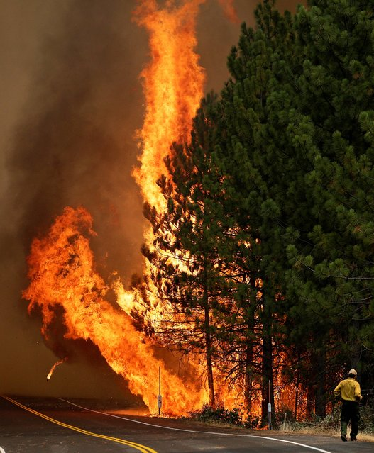 The Rim Fire burns along Highway 120 near Yosemite National Park, Calif., on Sunday, August 25, 2013. With winds gusting and flames jumping from treetop to treetop, hundreds of firefighters have been deployed to protect communities in the path of the Rim Fire raging north of Yosemite National Park. (Photo by Jae C. Hong/AP Photo)