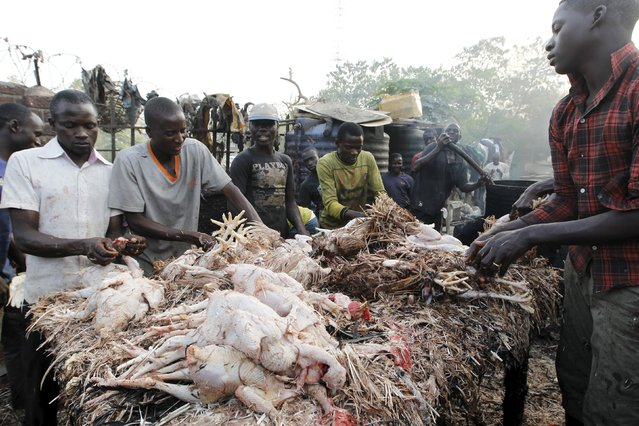 Men clean chicken on the eve of Christmas at Wuse market in Abuja, Nigeria December 24, 2015. (Photo by Afolabi Sotunde/Reuters)