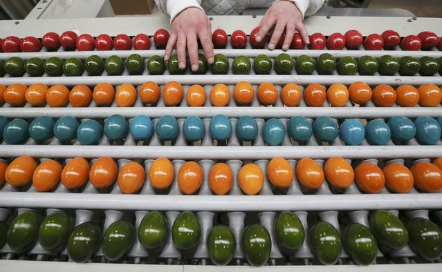 An employee sorts cooked and coloured eggs on a conveyor belt at the Schrall coloured eggs company in the Austrian Village of Diendorf March 16, 2015. (Photo by Leonhard Foeger/Reuters)