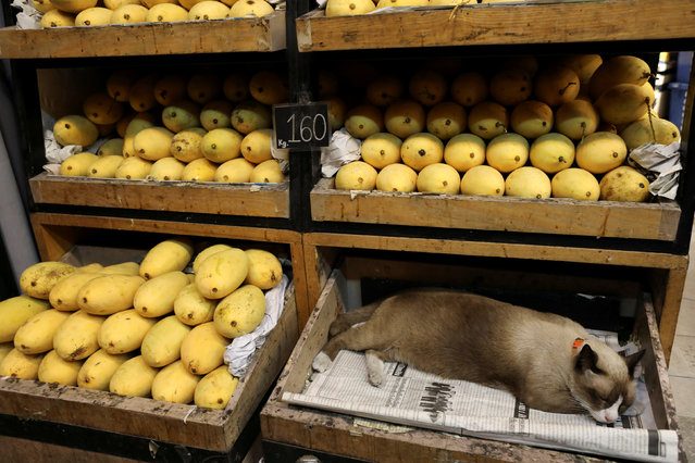 A cat sleeps in a box in a mango shop in Bangkok, Thailand on December 6, 2018. (Photo by Jorge Silva/Reuters)