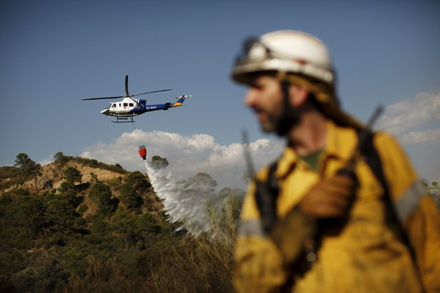 A helicopter drops water over a wildfire as a firefighter works to contain it in Benahavis, southern Spain, May 19, 2015. (Photo by Jon Nazca/Reuters)