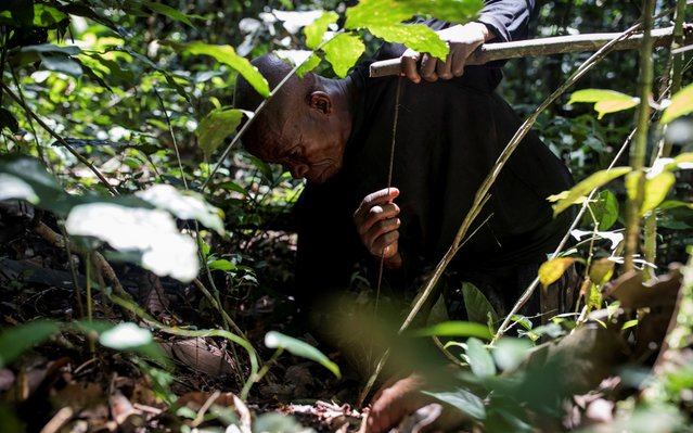 Mohamed Esimbo Matongu checks a trap in the forest near the city of Mbandaka, Democratic Republic of the Congo, April 3, 2018. (Photo by Thomas Nicolon/Reuters)