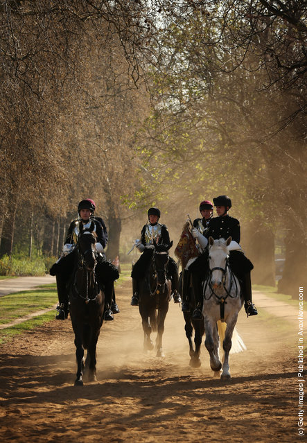 Horses of The Household Cavalry Mounted Regiment (HCMR) return to barracks after training in Hyde Park