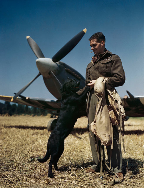 """The RAF's top-scoring fighter pilot, Wing Commander James """"Johnnie"""" Johnson, with his Spitfire and pet labrador Sally in Normandy, July 1944. (Photo by IWM/PA Wire)"""