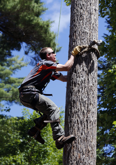 In this July 10, 2014 photo, Tyler Long, of Mechanicsburg, Penn., is timed during a speed climbing drill at the Adirondack Woodsmen's School at Paul Smith's College in Paul Smiths, N.Y. Eighteen young students in matching gray sports shirts took part recently in a weeklong crash course on old-school lumberjack skills such as sawing, chopping, ax throwing, log boom running and pole climbing. (Photo by Mike Groll/AP Photo)