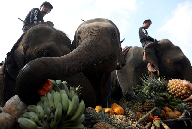People feed elephants before a match at the annual King's Cup Elephant Polo Tournament at a riverside resort in Bangkok, Thailand March 8, 2018. (Photo by Soe Zeya Tun/Reuters)