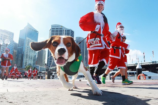 Sydneysiders run along the Darling Harbour boardwalk during the 2014 Variety Santa Fun Run on December 7, 2014 in Sydney, Australia. Variety is the children's charity committed to help Australian children who are sick, disadvantaged or have special needs. (Photo by Lisa Maree Williams/Getty Images)