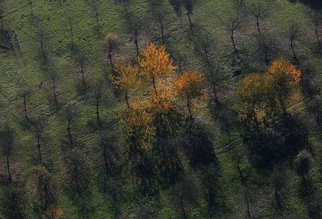 An aerial view shows a field with deciduous trees on a sunny autumn day in Recklinghausen, Germany, October 31, 2015. (Photo by Ina Fassbender/Reuters)