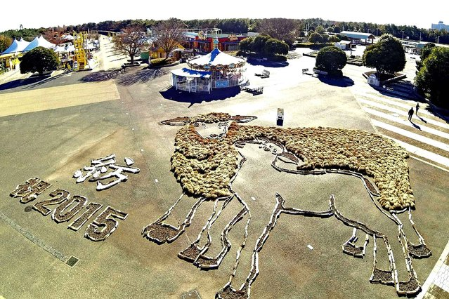 People walk around a geoglyph of sheep, the zodiac animal for 2015, Hitachi Seaside Park in Hitachinaka, Ibarak Prefecture on December 17, 2014. The-20-meter- long, 30-meter-wide artwork uses kochias ( summer cypress) for the parent sheeps' wool and pine cones for the animal's eyes and ears. It can be viewed from the park's Ferris wheel, which about 65 meters tall, through January 12. (Photo by The Yomiuri Shimbun via AP Images)