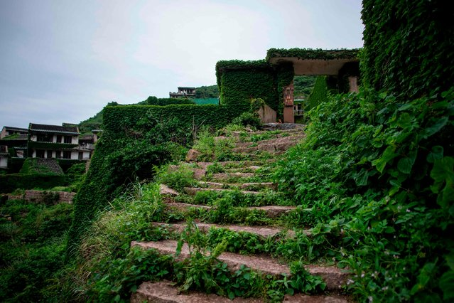 This picture taken on May 31, 2018 shows a footpath overgrown with vegetation in Houtouwan on Shengshan island, China' s eastern Zhejiang province. (Photo by Johannes Eisele/AFP Photo)