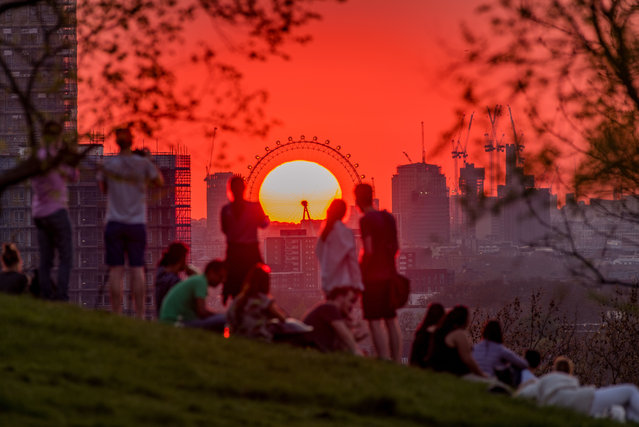 Londoners enjoying the magnificent sight of sun setting perfectly in the middle of London Eye as seen from Greenwich Park in London, England on the warmest day of the year on April 19, 2018. (Photo by London Viewpoints/Rex Features/Shutterstock)