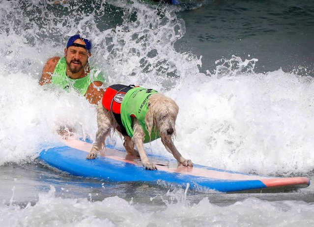"""Ryan Thor of Culver City and """"Kona Kai"""", a labradoodle competed during the 2018 Imperial Beach Surf Dog Competition next to the Imperial Beach Pier in San Diego, California on July 28, 2018. (Photo by Howard Lipin/San Diego Union-Tribune via ZUMA Press/Rex Features/Shutterstock)"""
