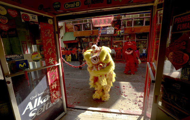Dancers perform a lion dance to celebrate the Chinese Lunar New Year in Chinatown in Panama City, Thursday, February 19, 2015. (Photo by Arnulfo Franco/AP Photo)