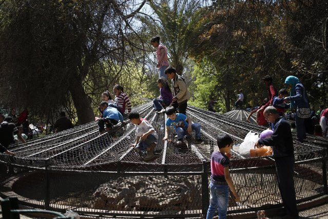 "Egyptian children play on top of a cage at the Giza Zoo, as the country marks Sham el-Nessim, or ""smelling the breeze"", in Giza, Egypt, Monday, April 13, 2015. (Photo by Hassan Ammar/AP Photo)"