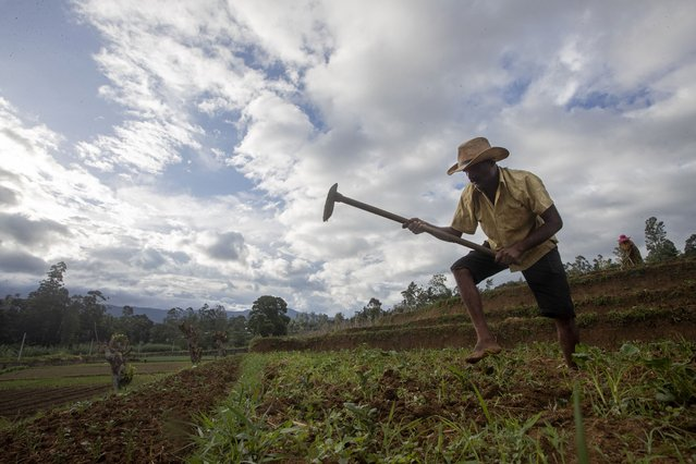 Sri Lankan vegetable farmer Pathmasiri Kumara removes weeds in his potato field in Keppetipola, Sri Lanka on July 1, 2021. Sri Lanka has cut back on imports of farm chemicals, cars and even its staple spice turmeric as its foreign exchange reserves dwindle, hindering its ability to repay a mountain of debt as the South Asian island nation struggles to recover from the pandemic. (Photo by Eranga Jayawardena/AP Photo)
