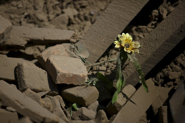 A flower is seen amidst the debris of a collapsed house following Saturday's earthquake in Bhaktapur, Nepal April 27, 2015. (Photo by Navesh Chitrakar/Reuters)
