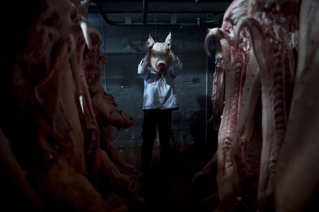 In this December 6, 2012 photo, an employee of the Mizra pork factory poses with a pig's head in a refrigerated warehouse in Kibbutz Mizra, northern Israel. The million-strong Soviet immigrant community has increased customer demand for pork in the country, a non-kosher food rarely eaten by Israeli Jews. (Photo by Oded Balilty/AP Photo)