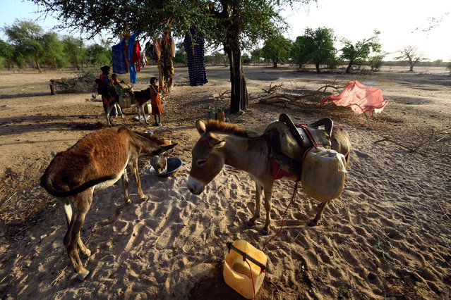 A donkey drinks while a family collects water in Um Dafuq, Sudan May 29, 2017. (Photo by Mohamed Nureldin Abdallah/Reuters)