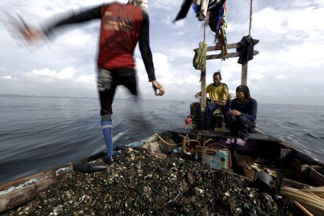 Kasno walks on his boat as he collects green mussels in Jakarta Bay, Indonesia, April 20, 2016. (Photo by Reuters/Beawiharta)