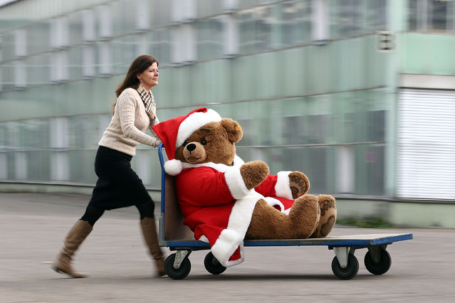 A christmas teddy bear is wheeled along on a trolley at the Steiff stuffed toy factory on November 23, 2012 in Giengen an der Brenz, Germany. Founded by seamstress Margarethe Steiff in 1880, Steiff has been making stuffed teddy bears since the early 20th century ever since her nephew Richard Steiff exhibited the first commercially produced teddy bear in Europe in 1903. Teddy bears are among the most popular children's toys and the company is hoping for a strong Christmas season. (Photo by Thomas Niedermueller)