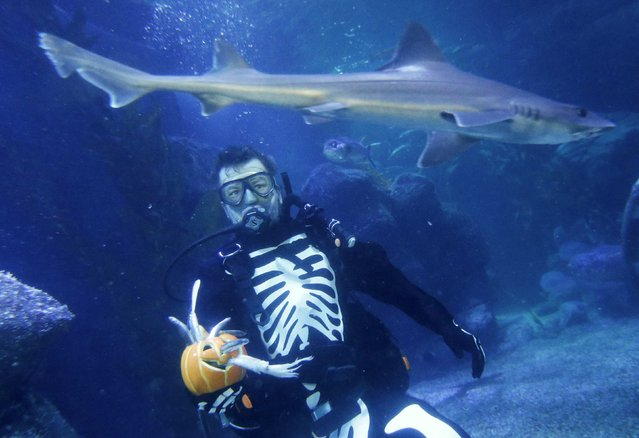 A shark passes by as a diver dressed in a skeleton costume for Halloween feeds fishes inside a fish tank at the Sea Life aquarium in Berlin, October 30, 2014. (Photo by Fabrizio Bensch/Reuters)