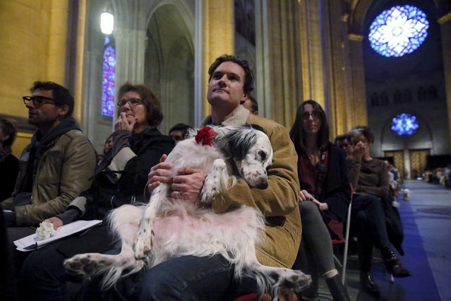 Jason Baker and dog, Iggy, attend the 31st annual Feast of Saint Francis and Blessing of the Animals at The Cathedral of St. John the Divine in the Manhattan borough of New York on October 4, 2015. (Photo by Elizabeth Shafiroff/Reuters)