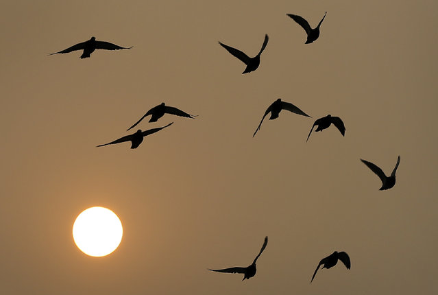Birds fly as the sun sets through haze in Beijing Wednesday, November 19, 2014. Chinese officials have imposed energy consumption caps for 2020 aimed at making the country less dependent on coal. Under the State Council's development plan issued Wednesday, the allowable growth by 2020 in energy consumption would be 28 percent of the 2013 level. For coal, growth would be limited to 16 percent of the 2013 level. (Photo by Andy Wong/AP Photo)