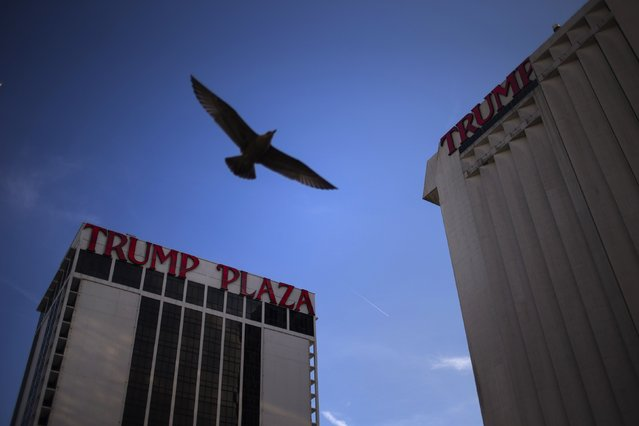 A seagull flies past the Trump Plaza Hotel and Casino, one of two casinos owned by Trump Entertainment Resorts, in Atlantic City, New Jersey, in this September 15, 2014 file photo. (Photo by Adrees Latif/Reuters)