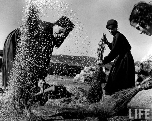 With the straw already broken away, wheat kernels are swept into a pile and one of the women threshers tosses them up so the breeze can carry off the chaff. (Photo by W. Eugene Smith/Time & Life Pictures)