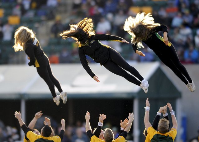 The Edmonton Eskimo Cheer Team performs during their CFL Western Final football game against the Calgary Stampeders in Edmonton November 22, 2015. (Photo by Dan Riedlhuber/Reuters)