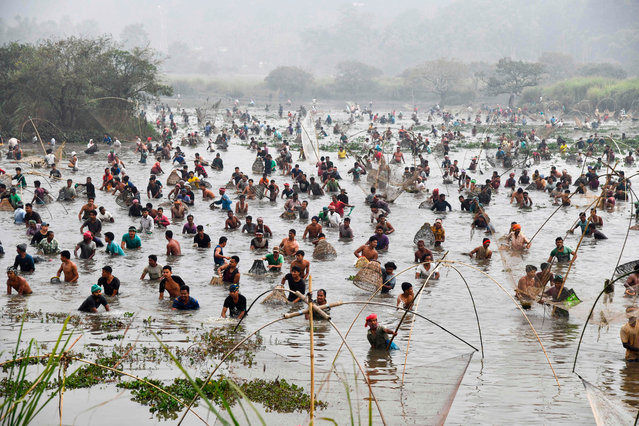 Villagers participate in a community fishing event during Bhogali Bihu harvest celebrations at Goroimari Lake in Panbari on January 13, 2021. (Photo by Biju Boro/AFP Photo)