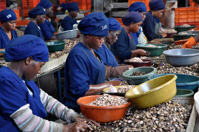 Women break raw cashew nuts at a cashew nuts processing factory in the central Ivorian city of Bouake on May 24, 2018. (Photo by Issouf Sanogo/AFP Photo)
