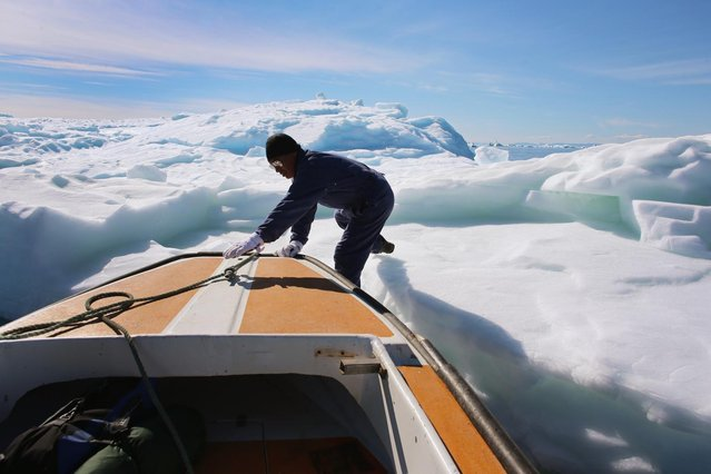 Knud Sakaessen jumps off onto an iceberg that broke off from the Jakobshavn Glacier as he takes some of the ice for use at home on July 21, 2013 in Ilulissat, Greenland. (Photo by Joe Raedle/Getty Images via The Atlantic)