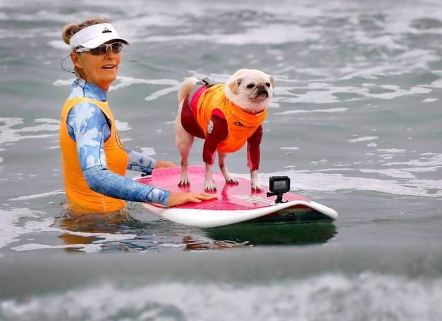 """""""Surf Gidget the Pug"""", and Alecia Nelson of Oceanside, took to the water at the Imperial Beach Pier during the 2018 Imperial Beach Surf Dog Competition next to the Imperial Beach Pier in San Diego, California on July 28, 2018. (Photo by Howard Lipin/San Diego Union-Tribune via ZUMA Press/Rex Features/Shutterstock)"""