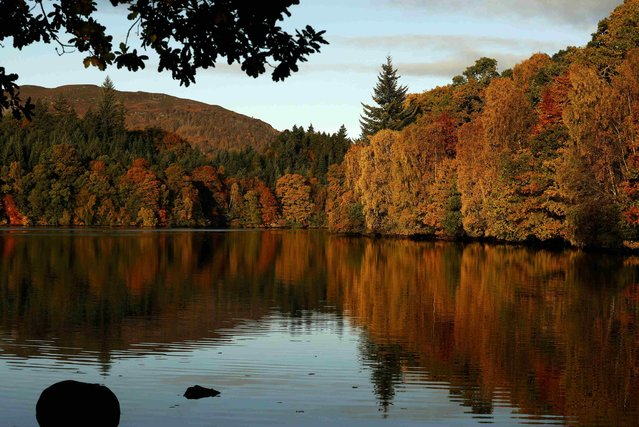 Autumn leaves are reflected in the water of Loch Faskally, in Pitlochry, Scotland, Britain October 24, 2016. (Photo by Russell Cheyne/Reuters)