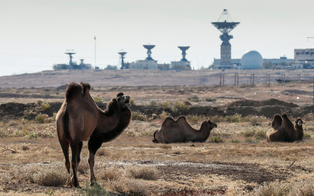 Camels graze in front of a spacecraft tracking station ahead of the Soyuz MS-10 upcoming launch at the Baikonur Cosmodrome, Kazakhstan, October 9, 2018. (Photo by Shamil Zhumatov/Reuters)