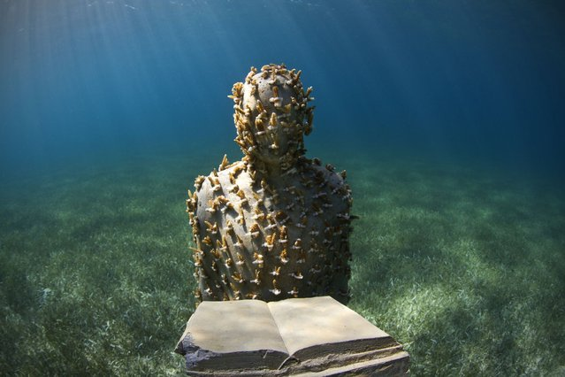 """Jason deCaires Taylor's sculpture """"The Speaker"""" stands in a bed of sea grass, on Oktober 16, 2013. The sculpture is planted with more than 200 cuttings of the rare Acropora Prolifera coral, in Cancun, Mexico. (Photo by Barcroft)"""