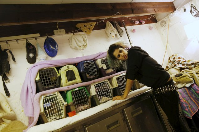 Israeli woman, Nora Lifschitz, 28, treats Egyptian fruit bats at her home in Tel Aviv February 22, 2016. (Photo by Baz Ratner/Reuters)