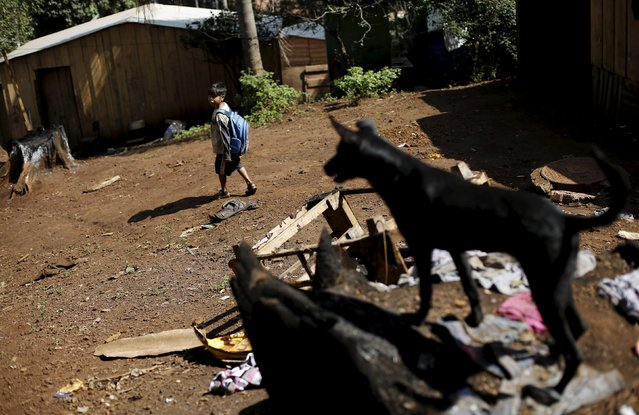 A Guarani Indian boy walks towards school in the village of Pyau at Jaragua district, in Sao Paulo April 28, 2015. (Photo by Nacho Doce/Reuters)