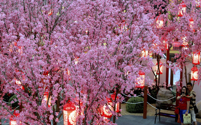 A couple takes pictures in front of Chinese plum blossoms trees decoration in Kuala Lumpur, Malaysia, Tuesday, January 28, 2014. (Photo by Daniel Chan/AP Photo)