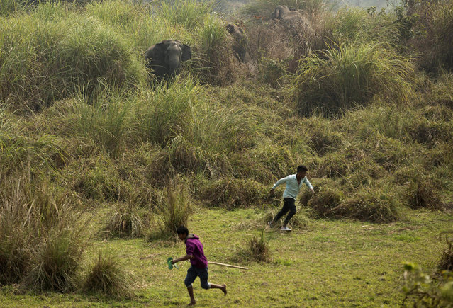 In this Thursday, February 9, 2017, file photo, wild elephants chase back Indian villagers who were trying to chase them away from their Misamari village on the outskirts of Gauhati, Assam state, India. Wildlife activists say human encroachment in the forests of northeast India have forced elephants out of their natural habitats, triggering conflicts with locals. Conservationists have urged the government to remove encroachments and free elephant corridors that are used by the beasts to move across forests in search of food. (Photo by Anupam Nath/AP Photo)