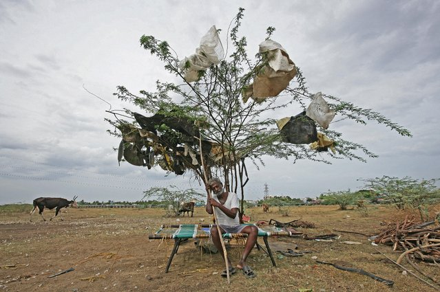 A shepherd takes rest under a tree on a dried-up lake on the outskirts of Chennai, India, June 27, 2019. (Photo by P. Ravikumar/Reuters)