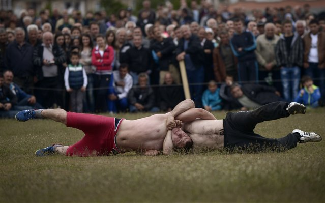 Competitors are locked into a strangulation during a traditional wrestling tournament, part of a holiday marking the circumcisions of young boys in the village of Draginovo, some 180km south-east of Sofia on May 04, 2014. More than 100 boys were circumcised during a traditional ceremony in the small mountain village. (Photo by Nikolay Doychinov/AFP Photo)