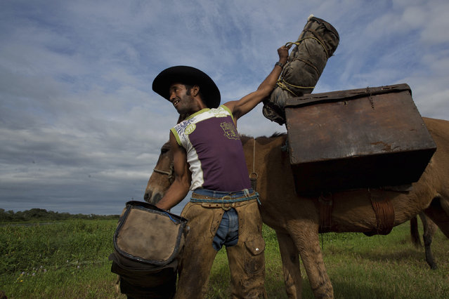 "In this May 17, 2017 photo, cowboy cook Odair Batista carries a case with food in Corumba, the Pantanal wetlands of Mato Grosso do Sul state, Brazil. Dressed with leather chaps on top of their jeans, stetson hats and a machete attached to their waists, before setting off, the men finish their breakfast with Terere, an herbal ""mate"" beverage served ice cold in an ox drinking horn. (Photo by Eraldo Peres/AP Photo)"