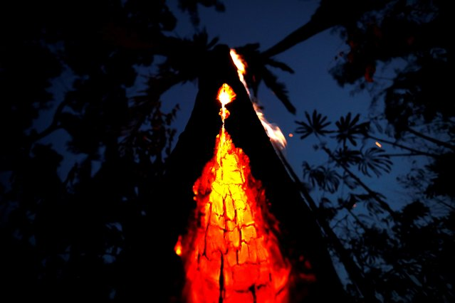 A burning tree is seen during a fire in an area of the Amazon rainforest in Itapua do Oeste, Rondonia State, Brazil, September 11, 2019. (Photo by Bruno Kelly/Reuters)
