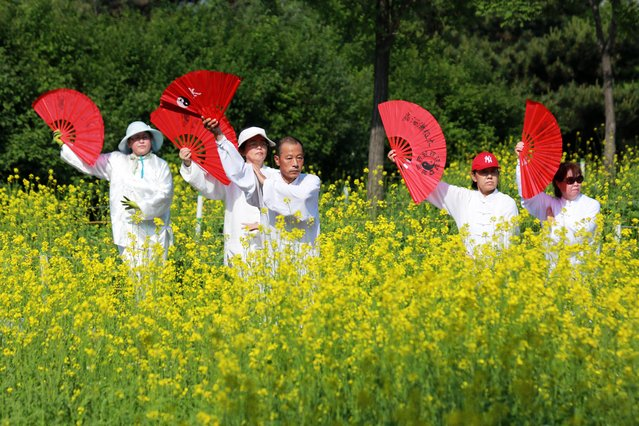 People practice Tai Chi Fan beside blooming rapeseed flowers at Beiling Park on May 28, 2020 in Shenyang, Liaoning Province of China. (Photo by Huang Jinkun/VCG via Getty Images)