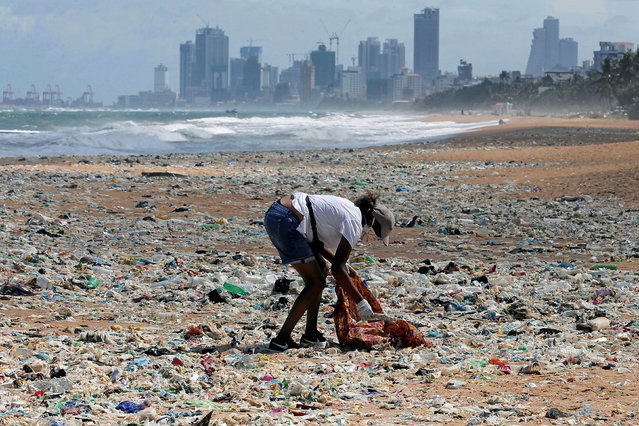 A volunteer collects garbage on the beach as the business city of the country is seen at the background during an event to mark the World Environment Day in Colombo, Sri Lanka, June 5, 2020. (Photo by Dinuka Liyanawatte/Reuters)