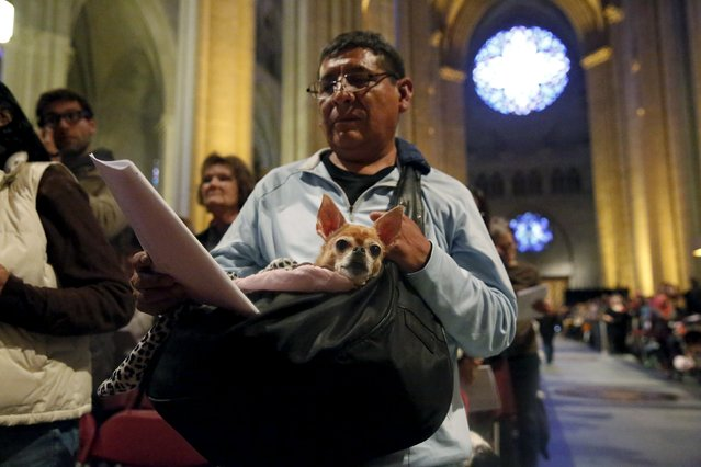 Mario Sanchez-Blanco and dog, Bambina, attend the 31st annual Feast of Saint Francis and Blessing of the Animals at The Cathedral of St. John the Divine in the Manhattan borough of New York on October 4, 2015. (Photo by Elizabeth Shafiroff/Reuters)