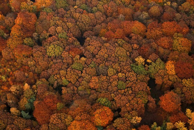 An aerial view shows a deciduous forest on a sunny autumn day in Recklinghausen, Germany, October 31, 2015. (Photo by Ina Fassbender/Reuters)
