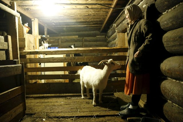 Local resident Lyudmila stands in a goat barn in her house in the village of Kalach, Sverdlovsk region, Russia October 18, 2015. (Photo by Maxim Zmeyev/Reuters)